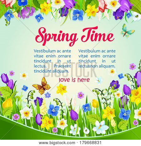 Spring Time vector greeting and wishes poster with flowers on green field and butterflies. Spring is Here quote design of blooming crocuses, tulips, narcissus daffodils or snowdrops and lily blossoms