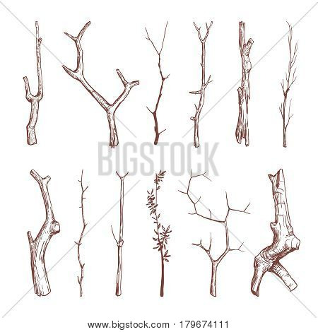 Hand drawn wood twigs, wooden sticks, tree branches vector rustic decoration elements. Set of natural wooden stick, illustration of oak dry stick