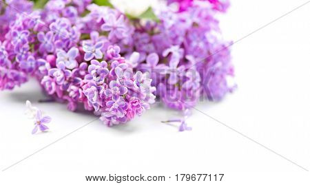 Lilac flowers bunch isolated over white background. Beautiful violet Lilac flower border design closeup. Copy space for your text