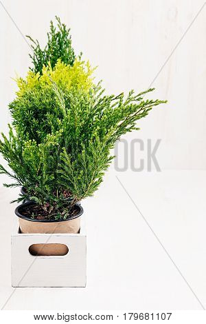 Home soft modern minimalistic with young green plants in white box with copy space on beige wood table.