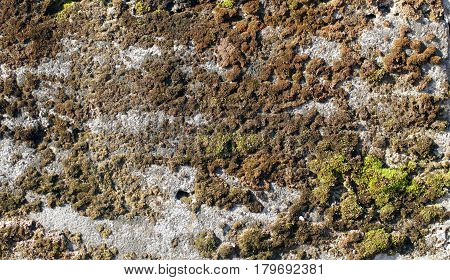 Old limestone surface with moss for background