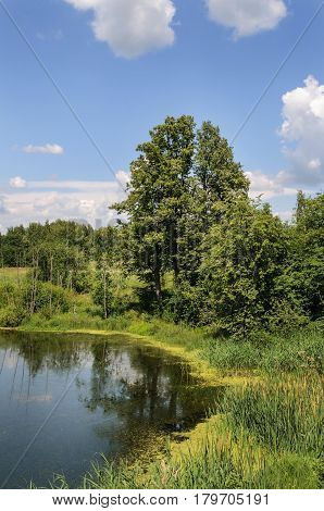 Green trees on the bank of small forest lake sunny summer day