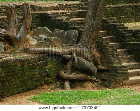 An ancient pond in the Royal Park, the Lion mountain Sigiriya, Ceylon, Sri Lanka