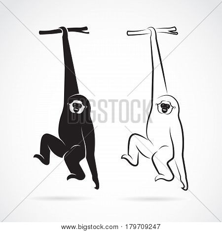 Vector of a gibbon on a white background. Wild Animals.