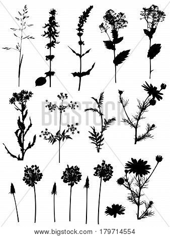 Set of vector black silhouettes flowers and plants on a white background