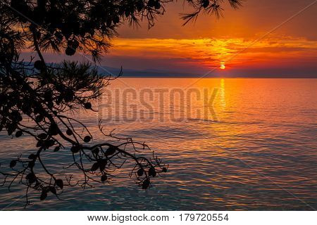 view of the sunset with pine trees in a small village Brela Croatia