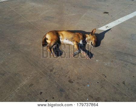 stray dog sleeping on cement floor under sunlight