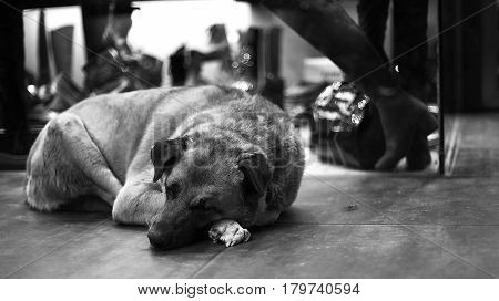 Homeless dog sleeping near the shop window. Stray dog.