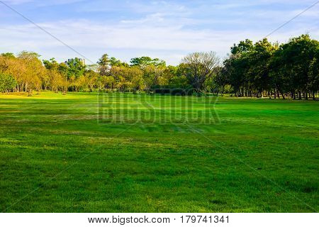 Tree With Green Meadow In Public Park