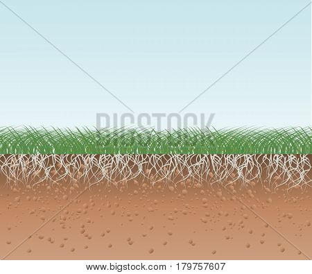 Green grass with roots and soil. Vector illustration flat design