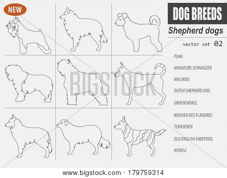 New Collection Dog Shepherd_8