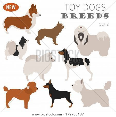 New Collection Dog Toy_5