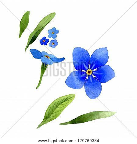Wildflower myosotis arvensis flower in a watercolor style isolated. Full name of the plant: Myosotis arvensis. Aquarelle wild flower for background, texture, wrapper pattern, frame or border.
