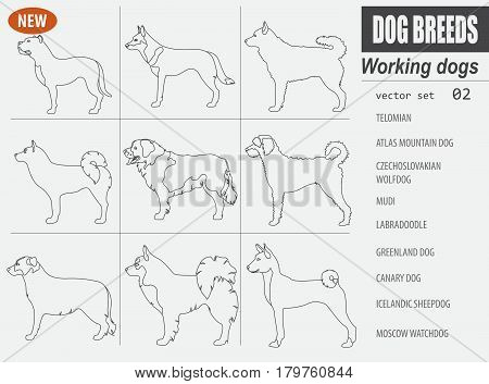 New Collection Dog Working_8