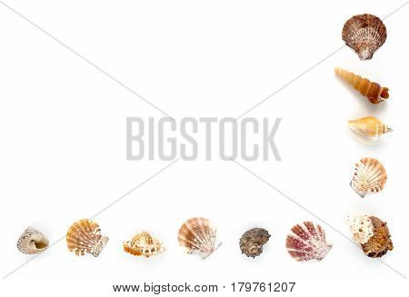 Seashell half frame isolated on white background with lots of copy space.