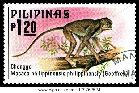 STAVROPOL RUSSIA - March 17 2017: A stamp printed by Philippines shows Crab-Eating Macaque Philippine animals circa 1979.