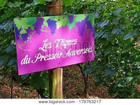 Auvers sur Oise France - august 14 2016 : vineyard