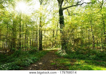 Verneuil sur Seine; France - october 30 2016 : the forest in the west of the city