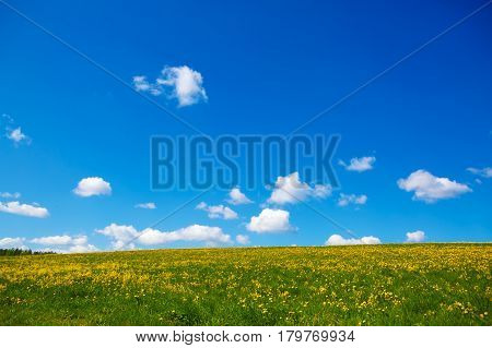 Field of yellow dandelions and a large sky with clouds to the horizon. Pastoral panorama of nature summer. Beautiful landscape of a Sunny day.