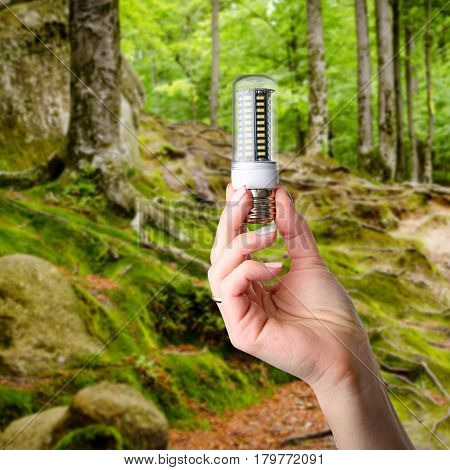 Hand holding LED bulb lamp on blured forest background. Eco power concept.