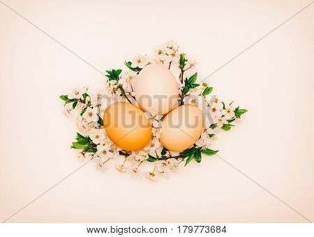three chicken eggs in flowering branches on a pink background. close-up top view. the concept of Easter spring