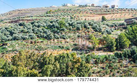 Village And Terraced Gardens On Hill In Jordan