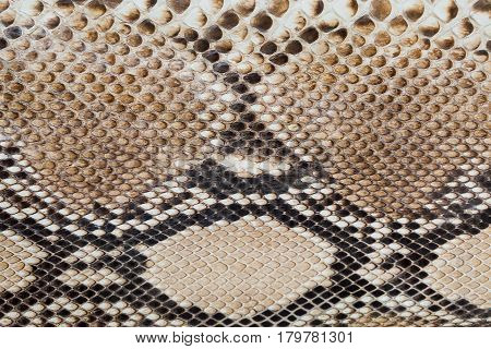 Fragment of a product made of snake skin