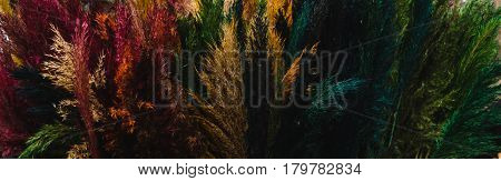 Photo of the Rainbow reed flower. Diversity concept. Creative work. Equal rights movement. Ethnic diversity. Multicolor background. Reeds texture