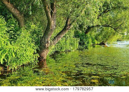 Green riverside in summer