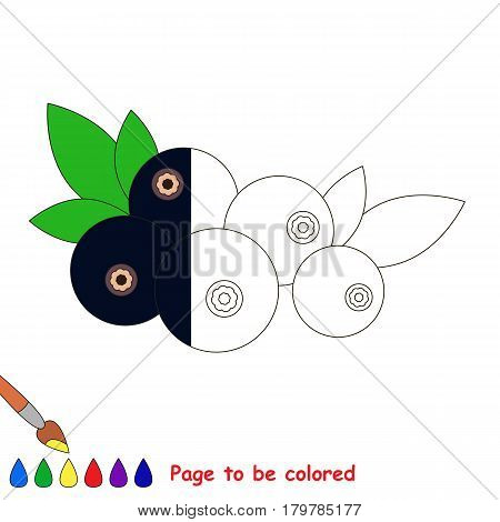 Black Bilberry, the coloring book to educate preschool kids with easy gaming level, the kid educational game to color the colorless half by sample.
