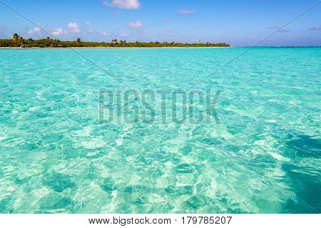 Tropical Caribbean Sea