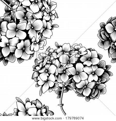 Seamless pattern hydrangea flower, blossom hydrangea flower, drawn hydrangea flower, monochrome hydrangea flower, decoration hydrangea flower. Vector.