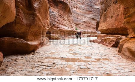 Stone Paved Al Siq Passage To Ancient Petra City