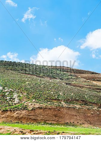 Hill Slope With Terraced Gardens In Jordan