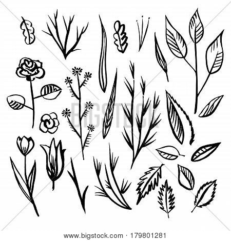 Collection of hand drawn flowers and plants. Doodle set. Monochrome vector illustrations sketch .