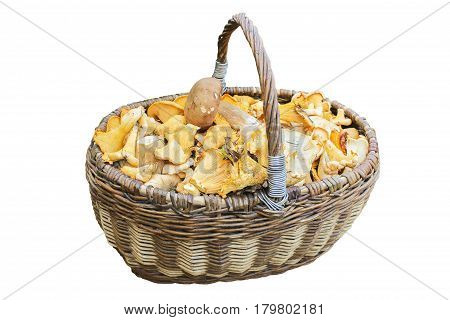 Wicker basket filled with mushrooms isolated on white background