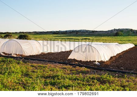 white small greenhouse in country garden in spring.