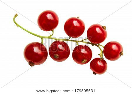 Bunch of red currant berries close-up isolated on white background