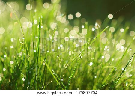 Morning dew on green fresh grass. Natural bokeh spring background.