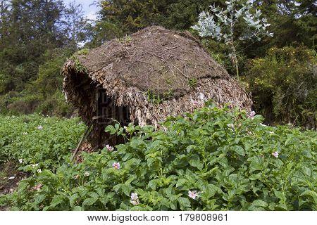 Native Village Rain Shelter In Potato Field, Virunga, Rwanda