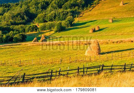 Haystacks And A Trees On A Hillside Meadow