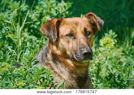 Portrait of Street Dog among the Grass
