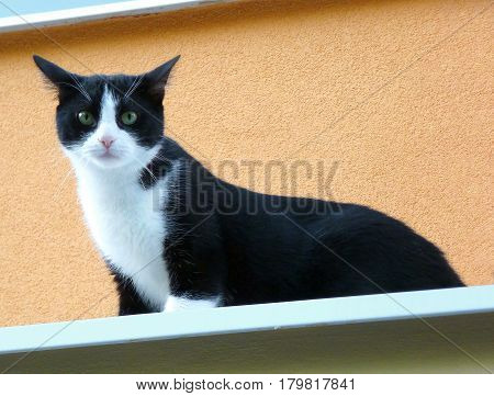 Black and white cat standing on top of a ledge