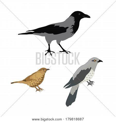 Forest birds. Crow, thrush, cuckoo. Vector illustration.