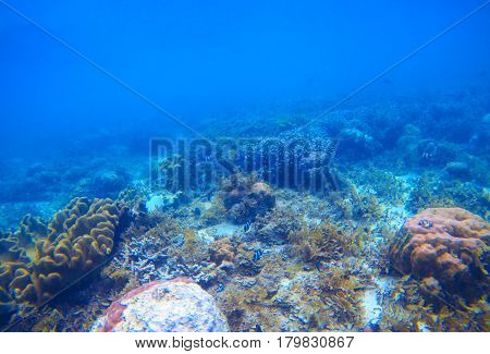 Underwater landscape with coral reef. Tropical seashore ecosystem. Marine animal species. Coral diversity environment. Natural undersea photo with seabottom perspective and blue water. Sea animals