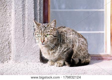 Cat sitting on windowsill outdoor