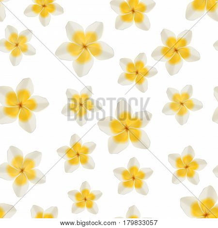 White and yellow tropical plumeria fragrant flowers on white background, seamless pattern for romantic and elegant design, vector illustration
