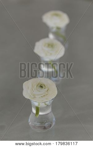 Three White Ranunculus Flower In Glass Of Water