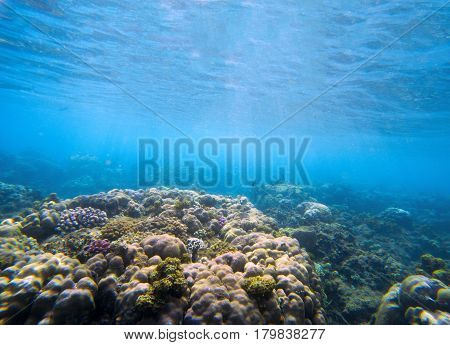 Underwater landscape with coral reef. Tropical seashore perspective photo. Coral ecosystem with sea animal and plant. Exotic island sea snorkeling scene. Natural aquarium. Sea life banner template