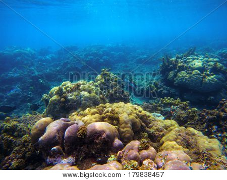 Underwater landscape with corals and sunlight. Tropical seashore undersea photo. Coral ecosystem with sea animal and plant. Exotic island sea snorkeling scene. Natural aquarium. Seabottom with corals